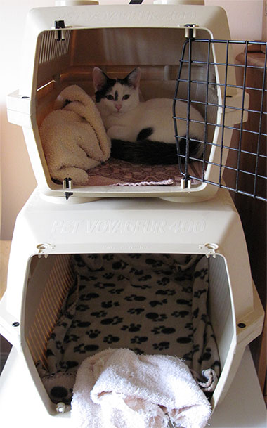 Kitty bunk beds... but who's the larger one for?