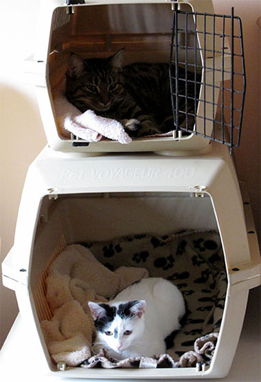 A large and small cat box with our cats using them as beds