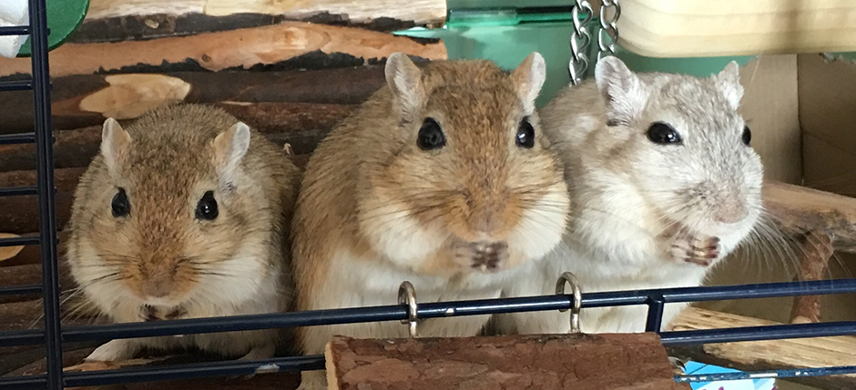 Cashew (right) with his brothers